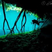 Experience the Cenotes